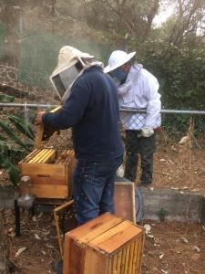 hombre haciendo apicultura