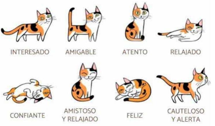 El comportamiento de los gatos