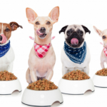 comida nutritiva para tus mascotas