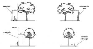 realización adecuada de reforestación de arboles y plantas