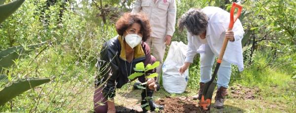 Alcaldía Tlalpan inicia reforestación en suelo (10)